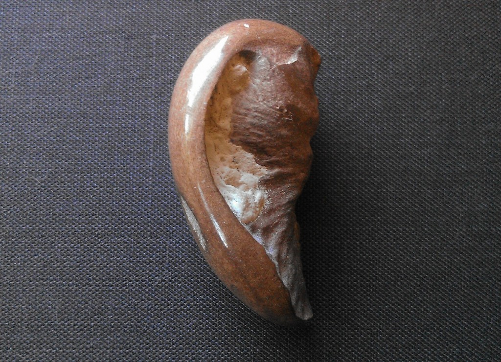 Whale Ear Resized